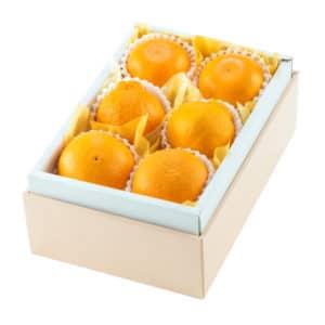 柑橘バラエティC