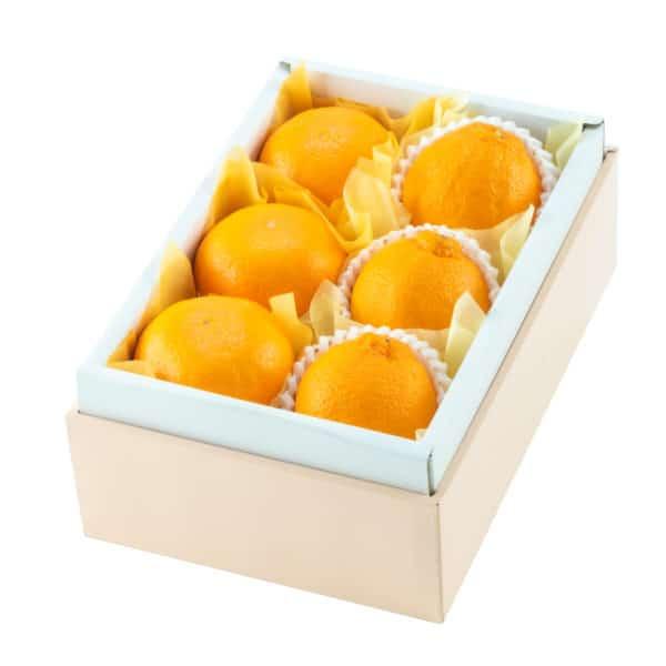 柑橘バラエティD
