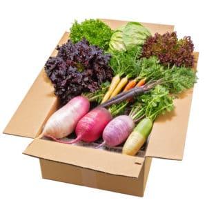 三浦の野菜セット