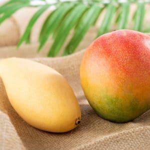 メキシコマンゴー タイマンゴー