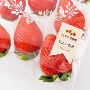 北海道苺1